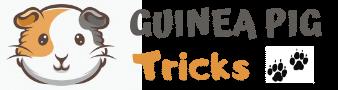 Guinea Pig Tricks